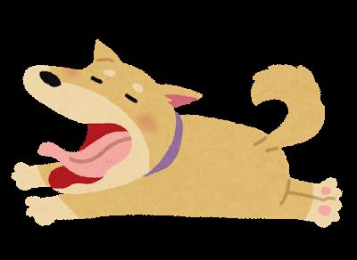 akubi_dog
