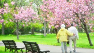 自宅で足腰を鍛える筋トレメニューと健康器具マシーン 高齢者におすすめ