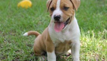 ペット(犬・猫) の免疫サプリは、βグルカンがおすすめです