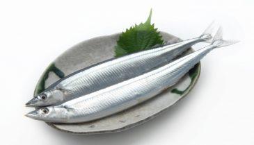 魚に豊富に含まれる、DHAやEPAの効果ついて詳しく知ろう!